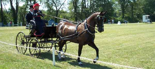 Dressage at the Driving Championship
