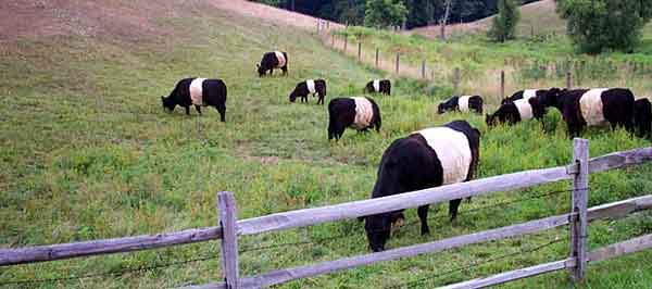 The Galloways of Centreville, DE